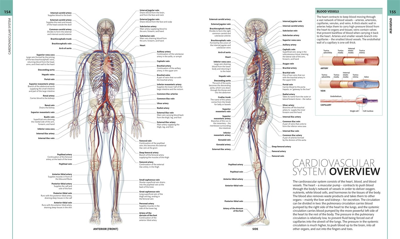Colour Atlas Of Human Anatomy